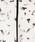 NOLLEY'S Sophi(ノーリーズソフィ)の「パイピングチューリップブラウス(シャツ/ブラウス)」|詳細画像