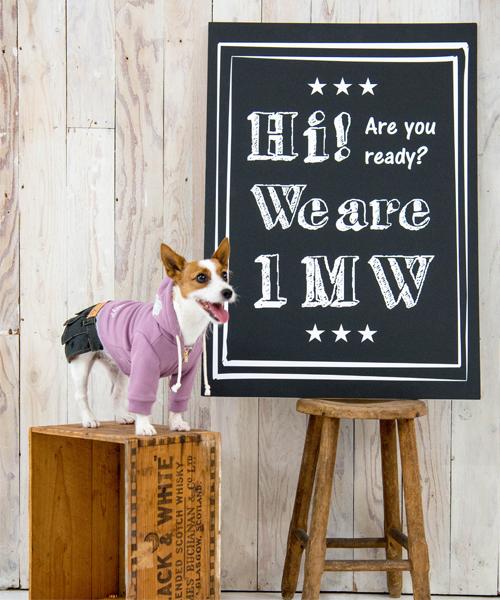 1 mile walkies/ワンマイルウォーキーズ/MAYFLOWERメイフラワー/犬服(ドッグウェア)