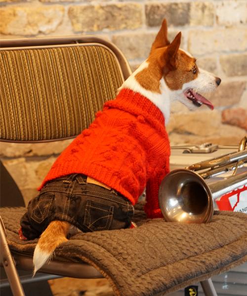 1 mile walkies/ワンマイルウォーキーズ/HOLLYホーリー/犬服(ドッグウェア)
