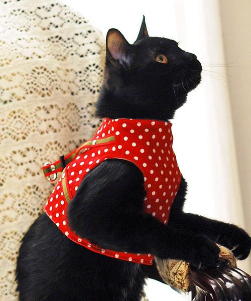 猫の暮らし/ねこのくらし/ハンドルベスト ドット/猫用品