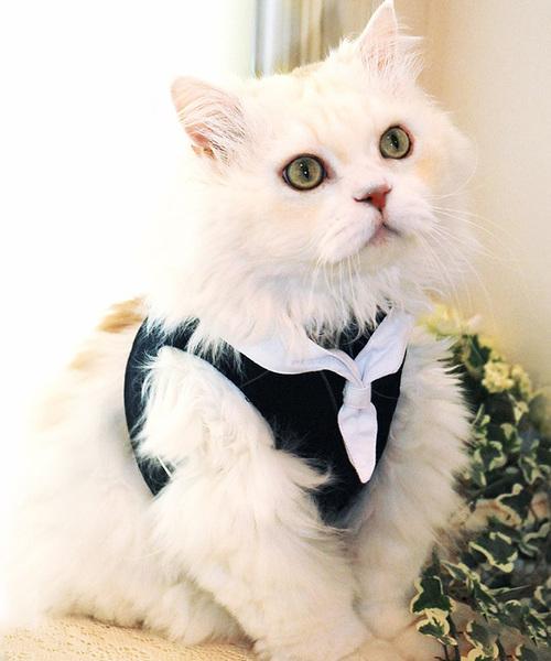猫の暮らし/ねこのくらし/ハンドルベスト セーラーマリン/猫用品