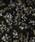 LEPSIM(レプシィム)の「アソートガラユルワイドパンツ 842375(パンツ)」|詳細画像