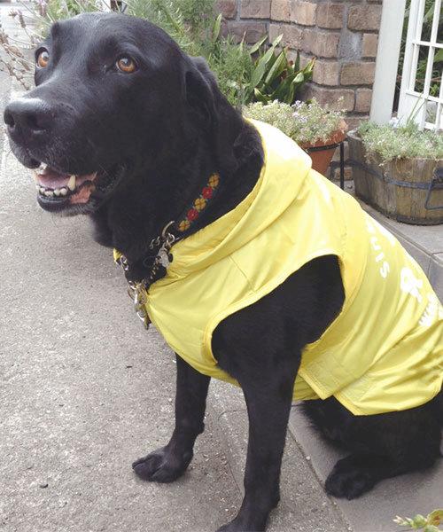 Calulu/カルル/レインコート大型サイズ/犬服(ドッグウェア)