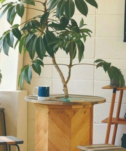 Hang out plants table 60 teak / ハングアウト プランツテーブル 60 チーク