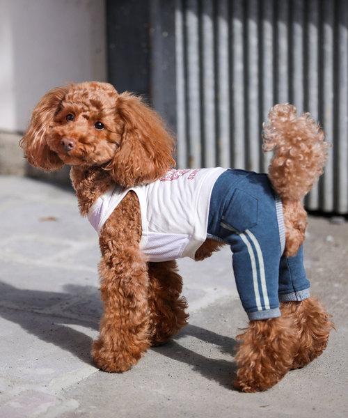犬と生活/いぬとせいかつ/ラインパンツ/犬服(ドッグウェア)