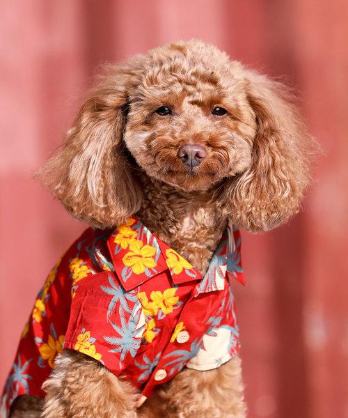 犬と生活/いぬとせいかつ/アロハシャツ/犬服(ドッグウェア)